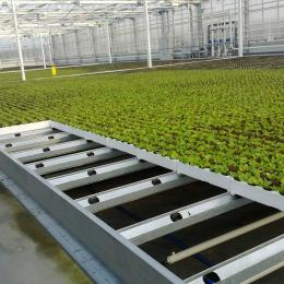 Green Automation - Living Lettuce system - Plant table